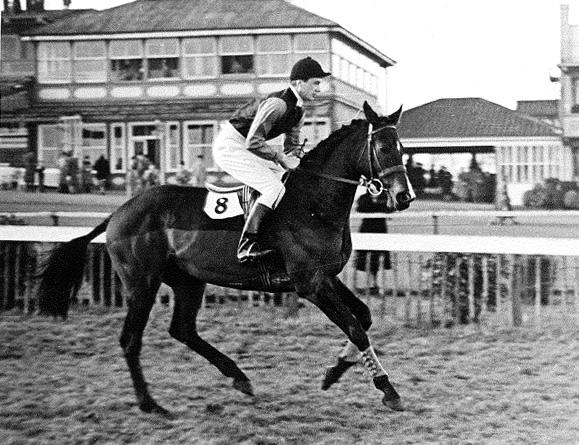 Mr Loyd on Robin Redfest, Cheltenham, 12th January 1950